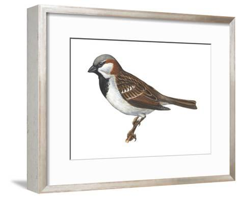 House or English Sparrow (Passer Domesticus), Birds-Encyclopaedia Britannica-Framed Art Print