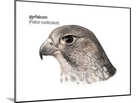 Head of Gyrfalcon (Falco Rusticolus), Birds-Encyclopaedia Britannica-Mounted Art Print