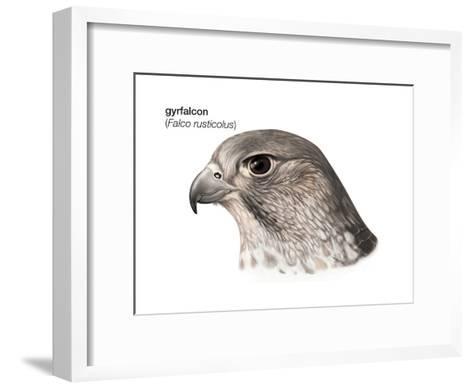 Head of Gyrfalcon (Falco Rusticolus), Birds-Encyclopaedia Britannica-Framed Art Print