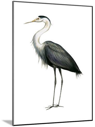 Great Blue Heron (Ardea Herodias), Birds-Encyclopaedia Britannica-Mounted Art Print