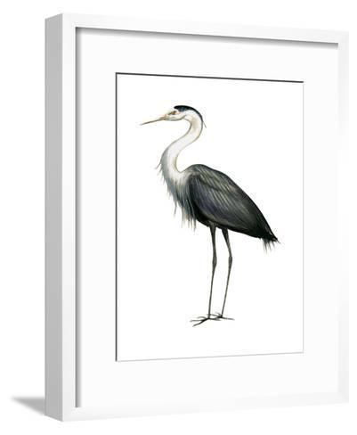 Great Blue Heron (Ardea Herodias), Birds-Encyclopaedia Britannica-Framed Art Print