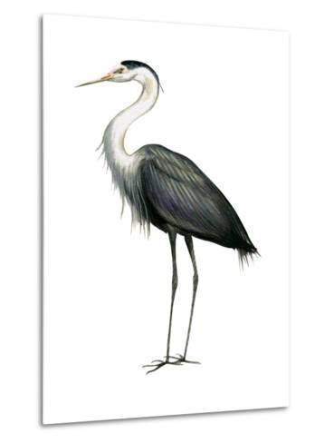 Great Blue Heron (Ardea Herodias), Birds-Encyclopaedia Britannica-Metal Print