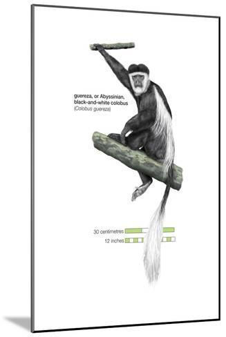 Guereza or Abyssinian, Black-And-White Colobus (Colobus Guereza), Monkey, Mammals-Encyclopaedia Britannica-Mounted Art Print