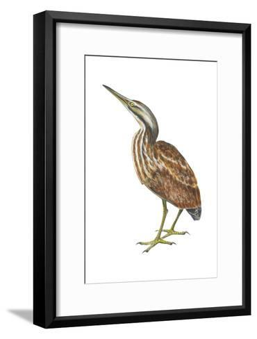 American Bittern (Botaurus Lentiginosus), Birds-Encyclopaedia Britannica-Framed Art Print