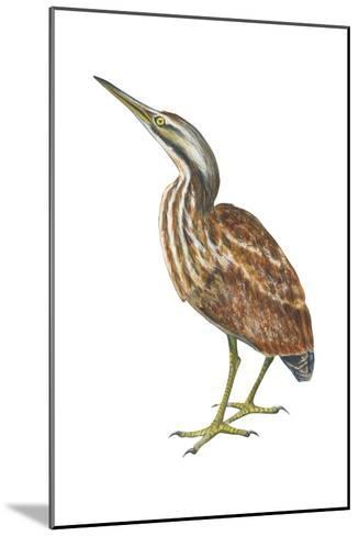 American Bittern (Botaurus Lentiginosus), Birds-Encyclopaedia Britannica-Mounted Art Print