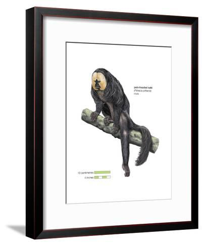 Male Pale-Headed Saki (Pithecia Pithecia), Monkey, Mammals-Encyclopaedia Britannica-Framed Art Print