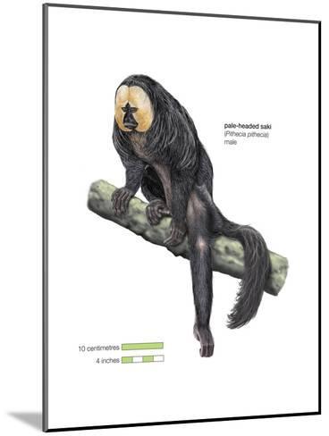 Male Pale-Headed Saki (Pithecia Pithecia), Monkey, Mammals-Encyclopaedia Britannica-Mounted Art Print