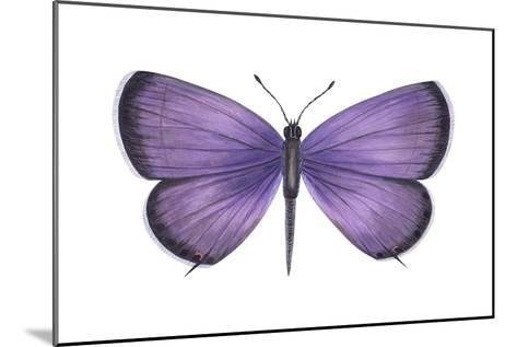 Eastern Tailed Blue Butterfly (Everes Comyntas), Insects-Encyclopaedia Britannica-Mounted Art Print