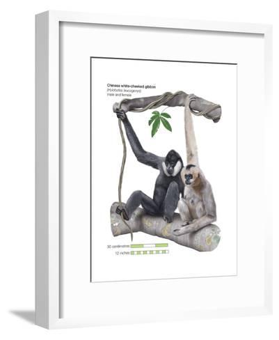 Male and Female Chinese White-Cheeked Gibbon (Hylobates Leucogenys), Ape, Mammals-Encyclopaedia Britannica-Framed Art Print