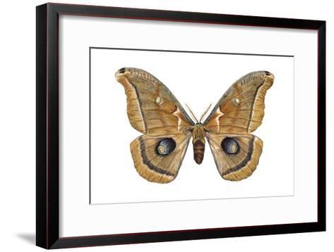 Polyphemus Moth (Telea Polyphemus), Insects-Encyclopaedia Britannica-Framed Art Print