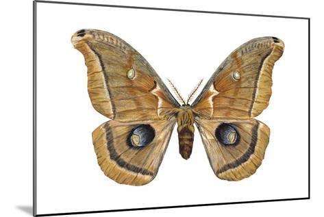 Polyphemus Moth (Telea Polyphemus), Insects-Encyclopaedia Britannica-Mounted Art Print