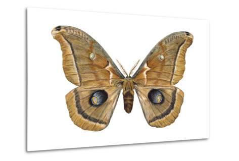 Polyphemus Moth (Telea Polyphemus), Insects-Encyclopaedia Britannica-Metal Print