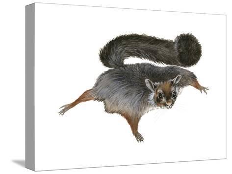 Giant Flying Squirrel (Petaurista), Mammals-Encyclopaedia Britannica-Stretched Canvas Print