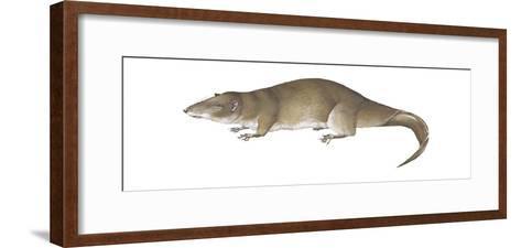 Giant Otter Shrew (Potamogale Velox), Mammals-Encyclopaedia Britannica-Framed Art Print