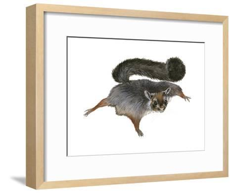 Giant Flying Squirrel (Petaurista), Mammals-Encyclopaedia Britannica-Framed Art Print
