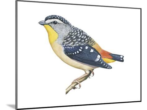 Spotted Diamondbird (Pardalotus Punctatus), Birds-Encyclopaedia Britannica-Mounted Art Print