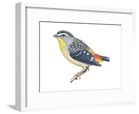 Spotted Diamondbird (Pardalotus Punctatus), Birds-Encyclopaedia Britannica-Framed Art Print