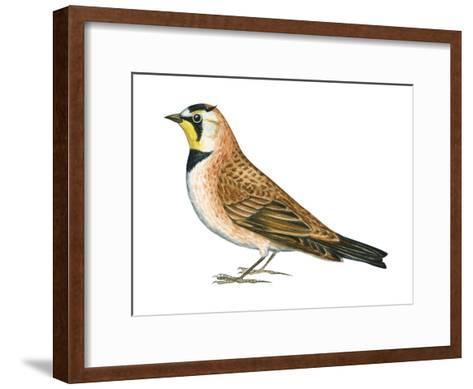 Horned Lark (Eremophila Alpestris), Birds-Encyclopaedia Britannica-Framed Art Print
