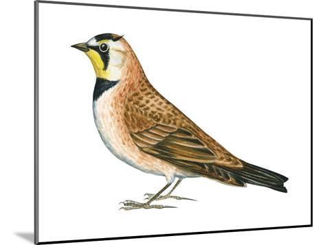 Horned Lark (Eremophila Alpestris), Birds-Encyclopaedia Britannica-Mounted Art Print