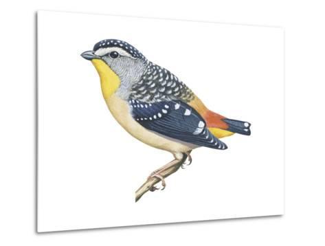 Spotted Diamondbird (Pardalotus Punctatus), Birds-Encyclopaedia Britannica-Metal Print