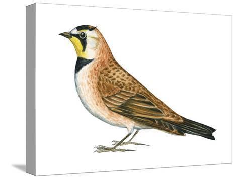 Horned Lark (Eremophila Alpestris), Birds-Encyclopaedia Britannica-Stretched Canvas Print
