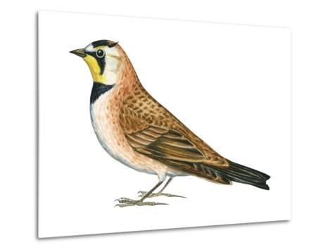 Horned Lark (Eremophila Alpestris), Birds-Encyclopaedia Britannica-Metal Print