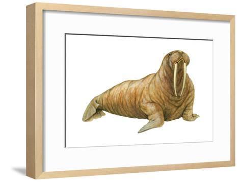 Walrus (Odobenus Rosmarus), Mammals-Encyclopaedia Britannica-Framed Art Print