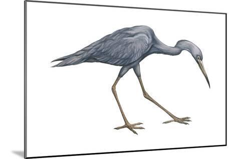 Little Blue Heron (Egretta Caerulea), Birds-Encyclopaedia Britannica-Mounted Art Print
