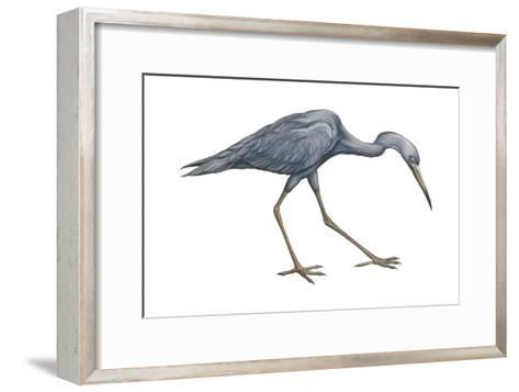 Little Blue Heron (Egretta Caerulea), Birds-Encyclopaedia Britannica-Framed Art Print