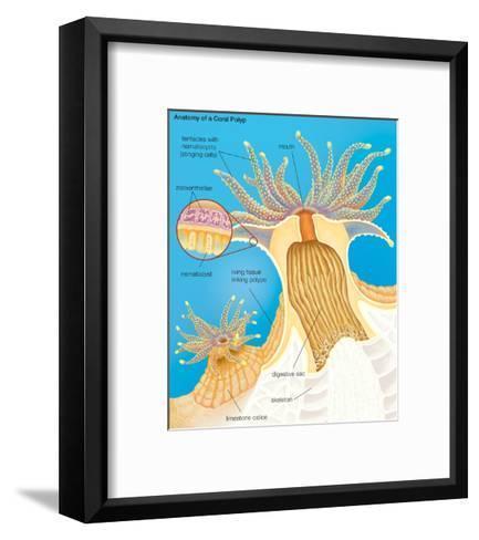 Cross Section of a Generalized Coral Polyp. Invertebrate, Cnidarians, Biology-Encyclopaedia Britannica-Framed Art Print