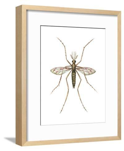 Anopheles Mosquito (Anopheles Quadrimaculatus), Insects-Encyclopaedia Britannica-Framed Art Print