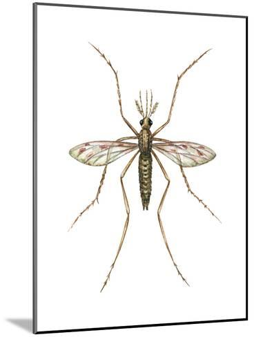 Anopheles Mosquito (Anopheles Quadrimaculatus), Insects-Encyclopaedia Britannica-Mounted Art Print