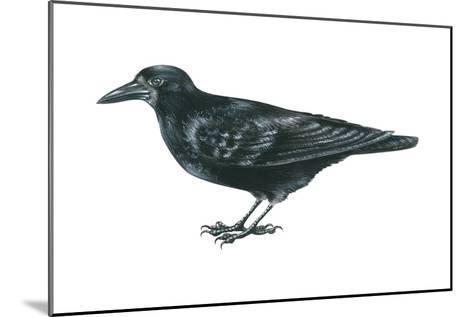 Rook (Corvus Frugilegus), Birds-Encyclopaedia Britannica-Mounted Art Print