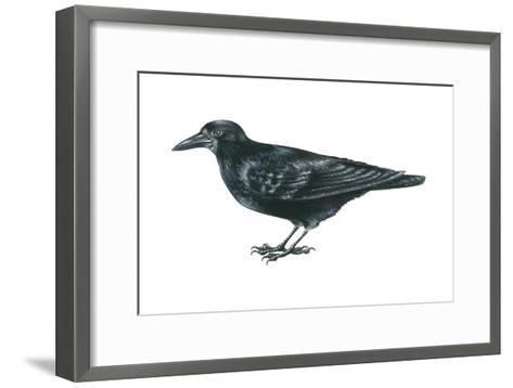 Rook (Corvus Frugilegus), Birds-Encyclopaedia Britannica-Framed Art Print