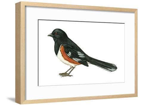 Rufous-Sided Towhee (Pipilo Erythrophthalmus), Birds-Encyclopaedia Britannica-Framed Art Print