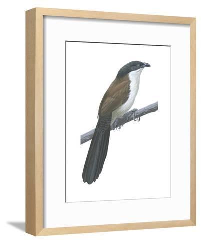 Senegal Coucal (Centropus Senegalensis), Birds-Encyclopaedia Britannica-Framed Art Print