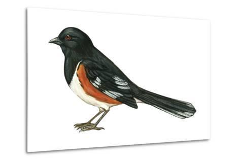 Rufous-Sided Towhee (Pipilo Erythrophthalmus), Birds-Encyclopaedia Britannica-Metal Print
