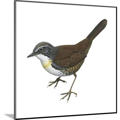 Rusty-Belted Tapaculo (Liosceles Thoracicus), Birds-Encyclopaedia Britannica-Mounted Art Print