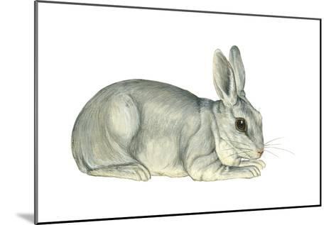 Domestic Rabbit (Oryctolagus Cuniculus), Mammals-Encyclopaedia Britannica-Mounted Art Print