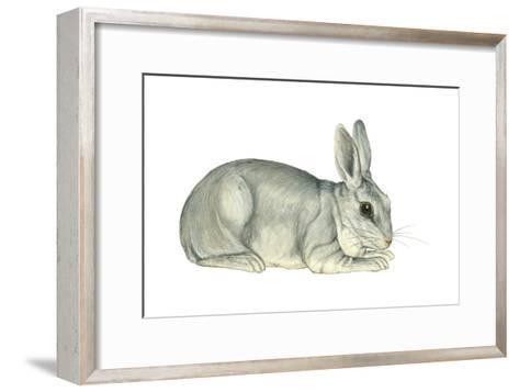 Domestic Rabbit (Oryctolagus Cuniculus), Mammals-Encyclopaedia Britannica-Framed Art Print