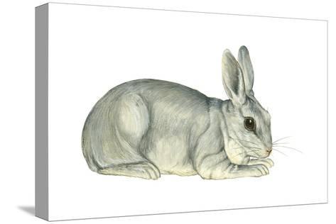 Domestic Rabbit (Oryctolagus Cuniculus), Mammals-Encyclopaedia Britannica-Stretched Canvas Print