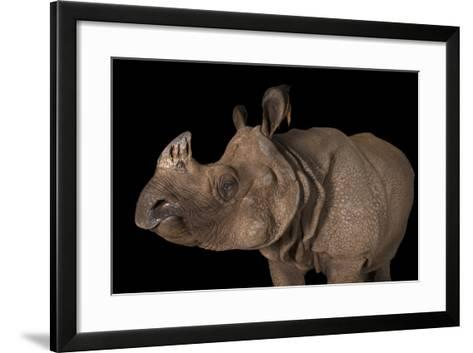 A Vulnerable Female Indian Rhinoceros, Rhinoceros Unicornis, at the Fort Worth Zoo-Joel Sartore-Framed Art Print