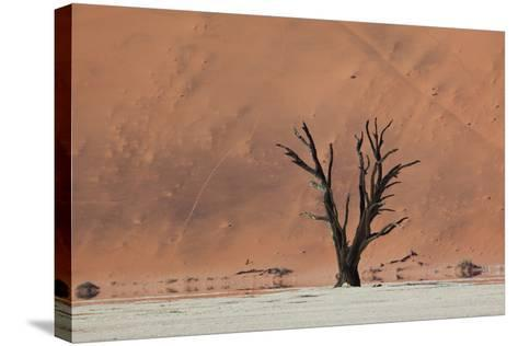An Acacia Tree and Sand Dune in Namibia's  Namib-Naukluft National Park-Alex Saberi-Stretched Canvas Print