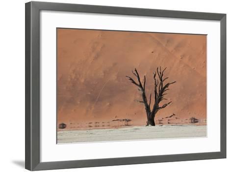 An Acacia Tree and Sand Dune in Namibia's  Namib-Naukluft National Park-Alex Saberi-Framed Art Print