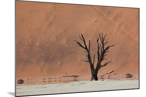 An Acacia Tree and Sand Dune in Namibia's  Namib-Naukluft National Park-Alex Saberi-Mounted Photographic Print