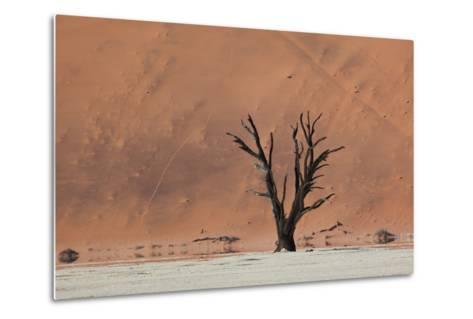An Acacia Tree and Sand Dune in Namibia's  Namib-Naukluft National Park-Alex Saberi-Metal Print