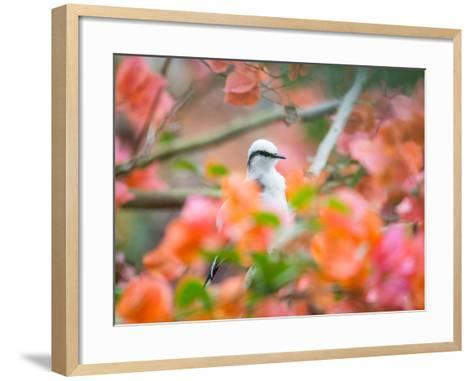 A Masked Water Tyrant Perches on a Tree Branch in the Atlantic Rainforest-Alex Saberi-Framed Art Print