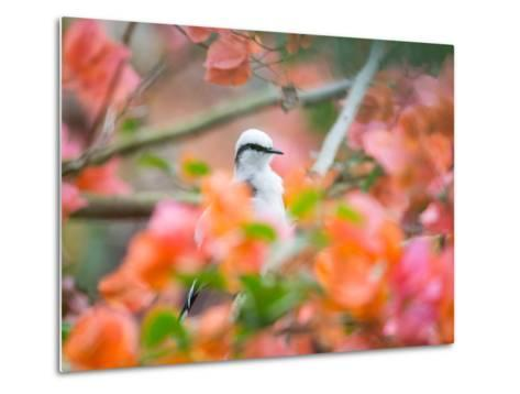 A Masked Water Tyrant Perches on a Tree Branch in the Atlantic Rainforest-Alex Saberi-Metal Print