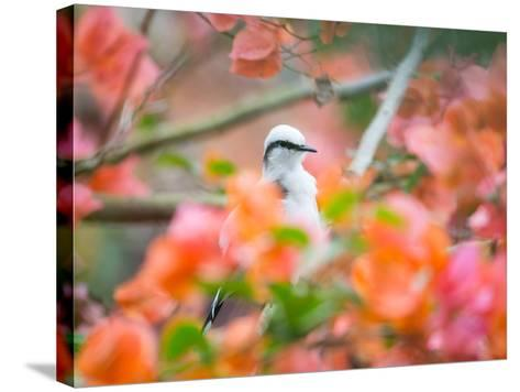 A Masked Water Tyrant Perches on a Tree Branch in the Atlantic Rainforest-Alex Saberi-Stretched Canvas Print