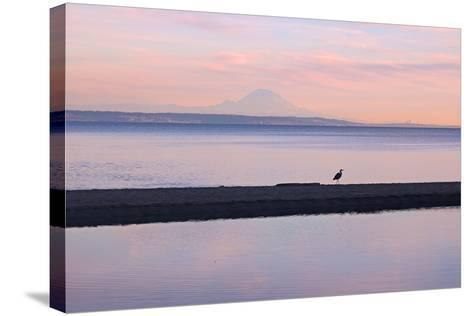 Great Blue Heron, Ardea Herodias, Near Mount Rainier in Seattle-Donna O'Meara-Stretched Canvas Print